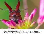 beetle and flowers | Shutterstock . vector #1061615882