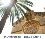 green palm tree near the stone... | Shutterstock . vector #1061642846