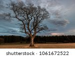single tree on a grass field at ... | Shutterstock . vector #1061672522