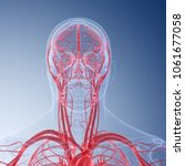 3d rendered medically accurate... | Shutterstock . vector #1061677058