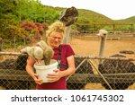 Tourist Man Feeds Ostriches In...