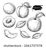 apricot vector drawing set.... | Shutterstock .eps vector #1061757578