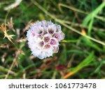 close up wild  flower blooming | Shutterstock . vector #1061773478