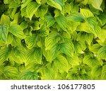 green leaves background | Shutterstock . vector #106177805