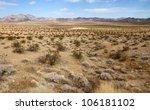Desert Landscape  Mojave Desert