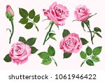 Stock vector pink vector roses and green leave elements set isolated on the white background for floral 1061946422