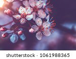 vintage style photo of a gentle ...   Shutterstock . vector #1061988365