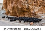 Herd of goats at the Todra River in the High Atlas Mountains in Morocco