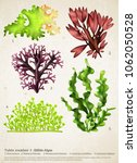 realistic seaweed set with... | Shutterstock .eps vector #1062050528