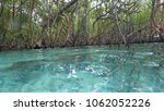 Small photo of Mangrove aea found at crystal clear island located in Tulai island, Malaysia