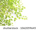 green leaf frame on a white... | Shutterstock . vector #1062059645