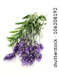 fresh lavender flowers on a... | Shutterstock . vector #106208192