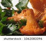 raw wild chanterelle mushrooms...   Shutterstock . vector #1062083396