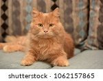 red cat lying on the couch | Shutterstock . vector #1062157865