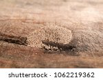 Pile of Termite Droppings on Old Timber Wood. Frass look like 6 side shape