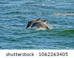Dolphins  St Andrews State Park ...