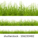 Green Grass Isolated On White...
