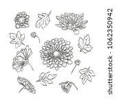vector hand drawn elegant... | Shutterstock .eps vector #1062350942