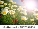 Summer Wildflowers   And Sun