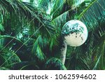 coconut  palm trees background... | Shutterstock . vector #1062594602