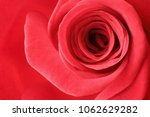 Small photo of Closeup of a wonderful red rose (Rosaceae).