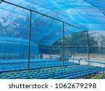 hydroponic farm systems in... | Shutterstock . vector #1062679298