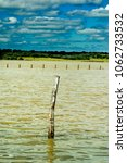 wooden pole in a lake on a day...   Shutterstock . vector #1062733532