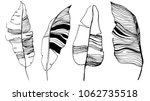 banana leaves illustration. set ... | Shutterstock .eps vector #1062735518