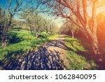 botanical gaden in sunny...   Shutterstock . vector #1062840095