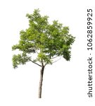 isolated tree on white... | Shutterstock . vector #1062859925