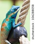 blue lizard  lacerta viridis  ...   Shutterstock . vector #106288058