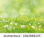 green grass lawn with white... | Shutterstock . vector #1062888125
