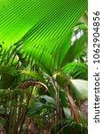 a tropical green rainforest on... | Shutterstock . vector #1062904856