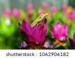 lizard in the garden   Shutterstock . vector #1062906182