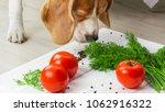 dog sniffs raw vegan food.... | Shutterstock . vector #1062916322