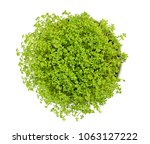 garden cress in white bowl ... | Shutterstock . vector #1063127222