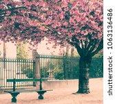 cherry blossoms in paris in...   Shutterstock . vector #1063136486