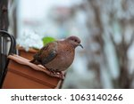 cute and lovely house sparrow... | Shutterstock . vector #1063140266