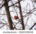 for the love of birds | Shutterstock . vector #1063158248