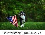 happy border collie carrying... | Shutterstock . vector #1063162775