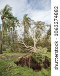 Small photo of Darwin,Northern Territory/Australia-March 17,2018: Fallen tree aftermath of Cyclone Marcus at Bicentennial Park with city apartments in Darwin, Australia