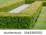 ornamental square cut box hedge | Shutterstock . vector #1063300202