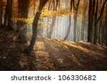 Autumn In Forest With Beautifu...