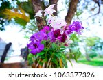 beautiful purple orchid in... | Shutterstock . vector #1063377326
