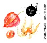 watercolor hand drawn physalis... | Shutterstock . vector #1063411385