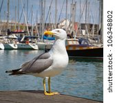 Proud Seagull In Port On Yacht...