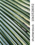 coconat leaf texture bakground | Shutterstock . vector #1063528052