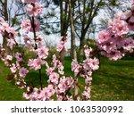 spring blossom tree | Shutterstock . vector #1063530992