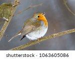 robin  erithacus rubecula .... | Shutterstock . vector #1063605086