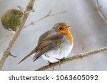 robin  erithacus rubecula ....   Shutterstock . vector #1063605092